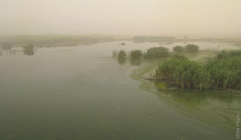 Jahra Pool Reserve, a refuge for migrants, in a sandstorm (photo by Mike Pope)