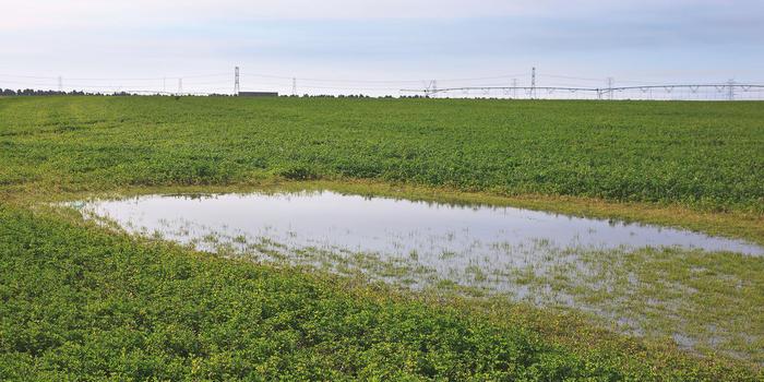 Sulaibiya Pivot Fields (photo Aris Vidalis)