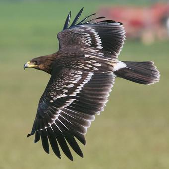 Kites - Hawks - Eagles