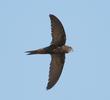 Common Swift