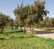 Al-Abraq Al-Khabari (photo Aris Vidalis)