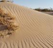 Humock dunes near the border