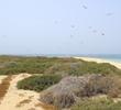 Umm al Maradim Island in late May